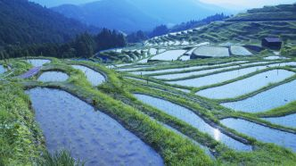 beautiful-japanese-rice-paddy-s-63757